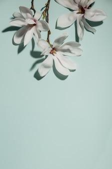 青の背景に美しいピンクのマグノリアの花。上面図。フラット横たわっていた。春のミニマルなコンセプト