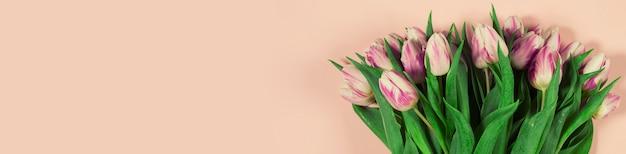 ピンクの背景にピンクのチューリップ