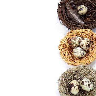 Перепелиные яйца в гнездах