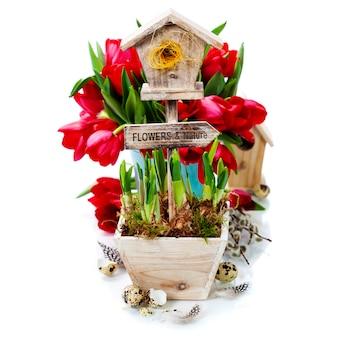 鉢植えの水仙と小さな巣箱
