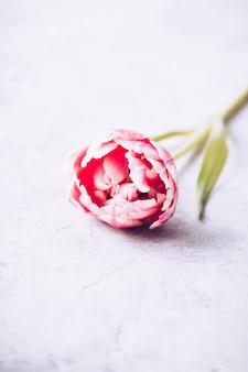 Пастельные розовые тюльпаны на фоне потертого шика
