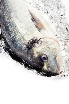 新鮮なドラダ魚