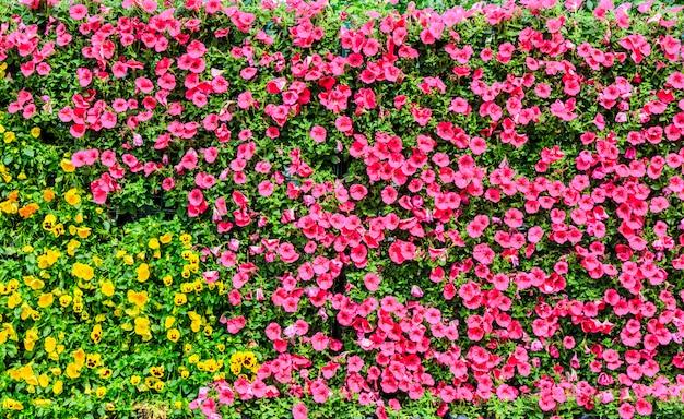 カラー都市の芝生夏の葉