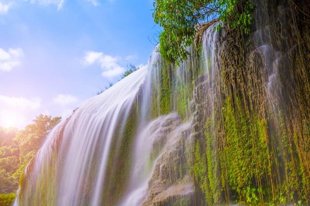 池の美しい木の湖のジャングル