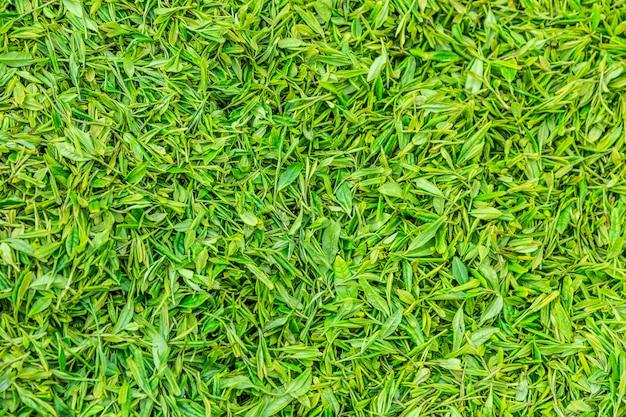緑の仕事中国の人の風景
