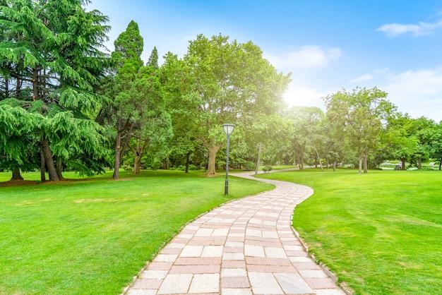 Зеленый зеленый лес в парке