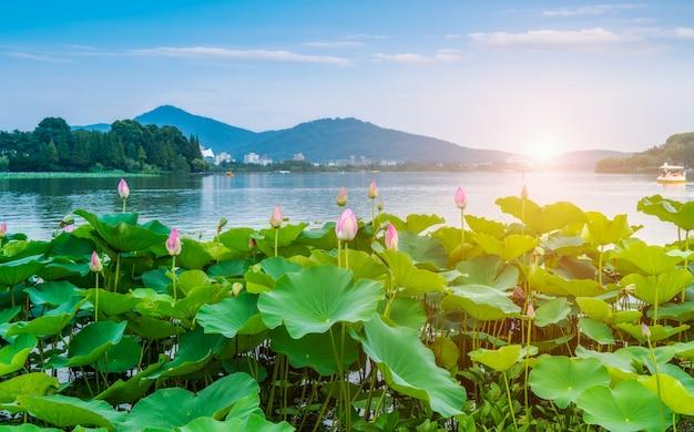 湖の蓮の池と風景