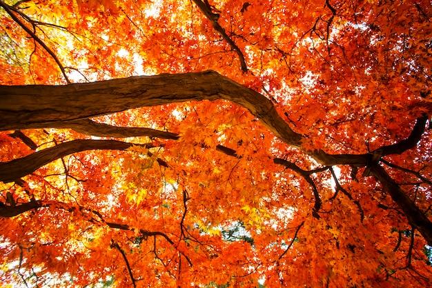 秋の美しい紅葉
