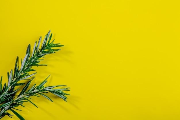 Вид сверху копией пространства розмарина ветки на желтом фоне