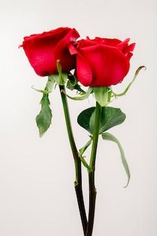 Вид сбоку розы красного цвета на белом фоне