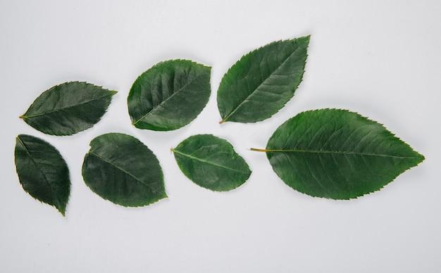 Вид сверху зеленые листья розы на белом фоне