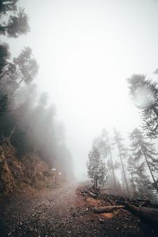 霧の朝、たくさんの木の森
