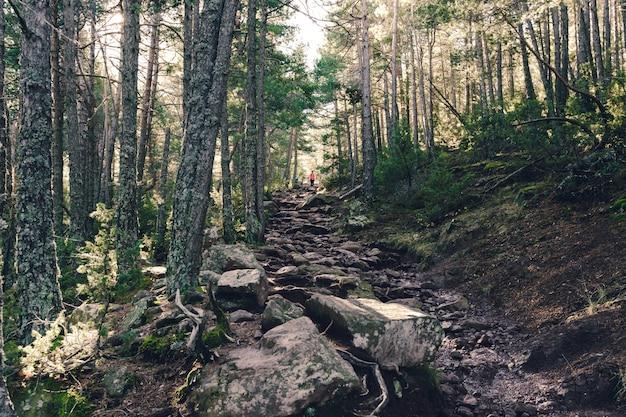 森の中の山の頂上への岩道