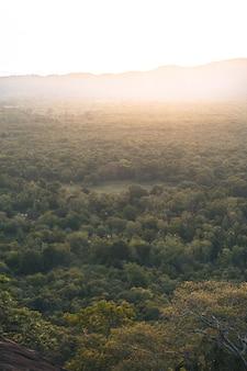 スリランカのジャングルの朝の光