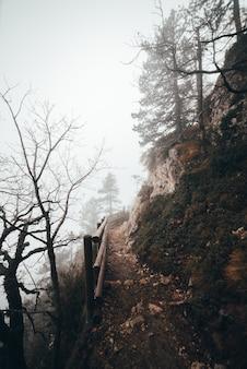 Путь к вершине в лесу
