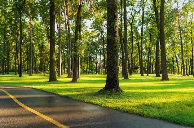 夏の朝の夕暮れ時の都市公園の木と美しい芝生フィールド。