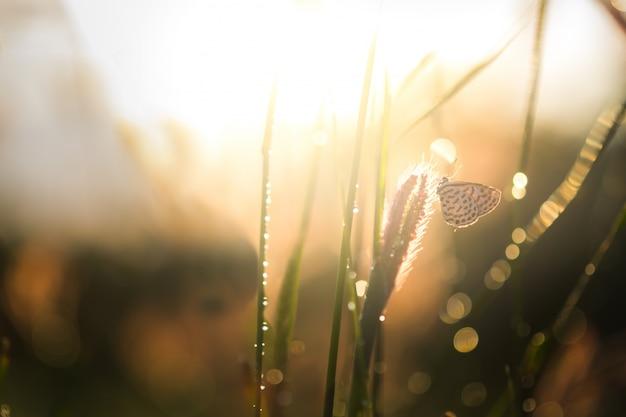 日の出の日の出草原の夜の自然美