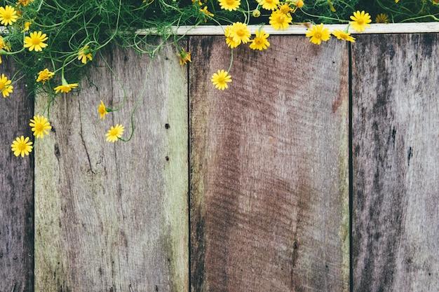 黄色のデイジーの花の背景。