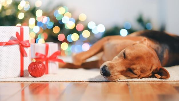 自宅でクリスマスを祝う贈り物と愛らしい犬。