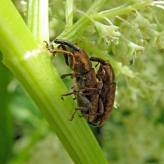 植物の緑の葉の上に座っている茶色のカブトムシ