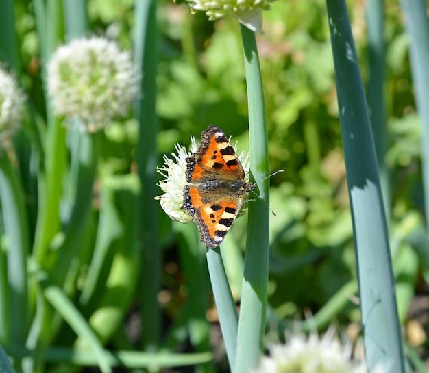 夏に玉ねぎの芽の上に座って美しいカラフルな蝶