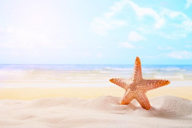 海洋の背景に夏の日没のビーチにヒトデ。旅行、休暇のコンセプト。