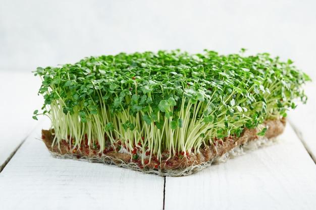 Макрофотография микрогрин брокколи, растущих на льняной коврик