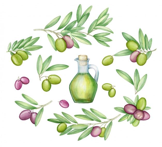オリーブセット。オリーブの枝とイタリア料理のフルーツ。水彩。