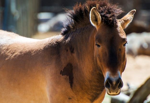 Макрофотография дикой лошади