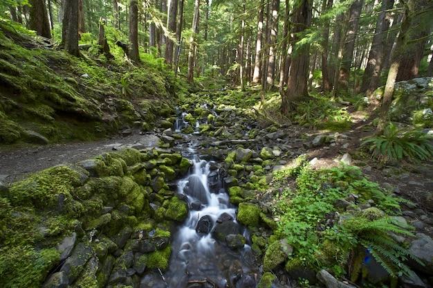オリンピック森林