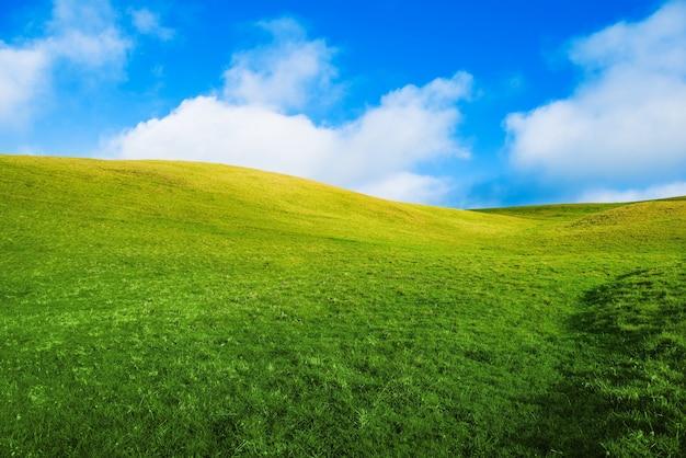 緑の夏の牧草地