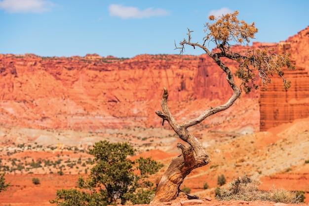 ユタ州の孤独な木