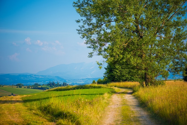 ポーランドの田舎道