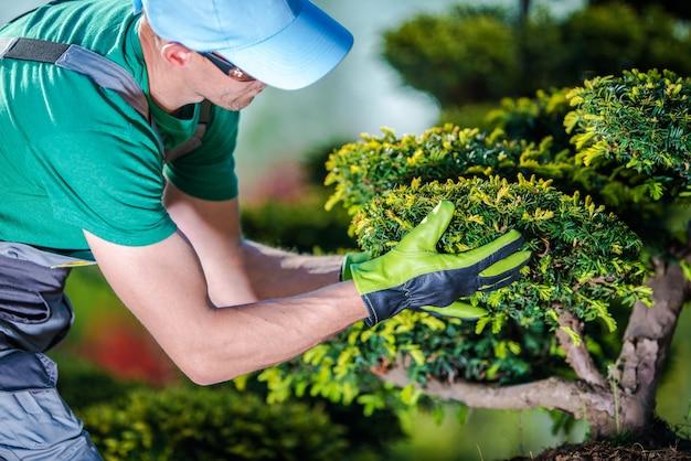 庭の木の世話をする