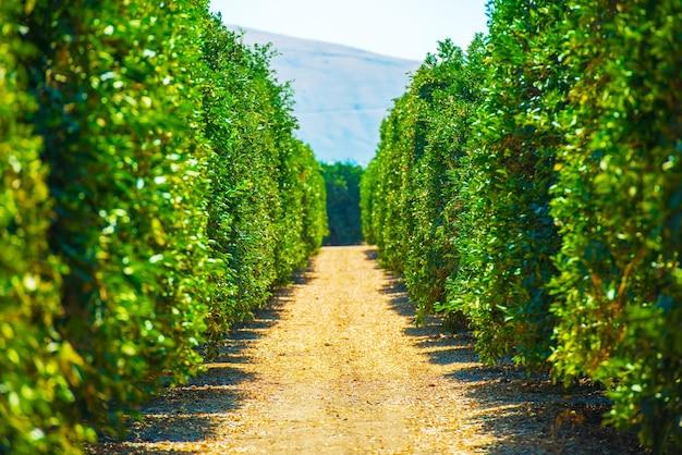 カリフォルニア農場