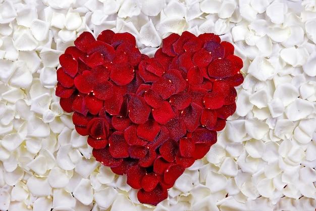 Сердце лепестков роз