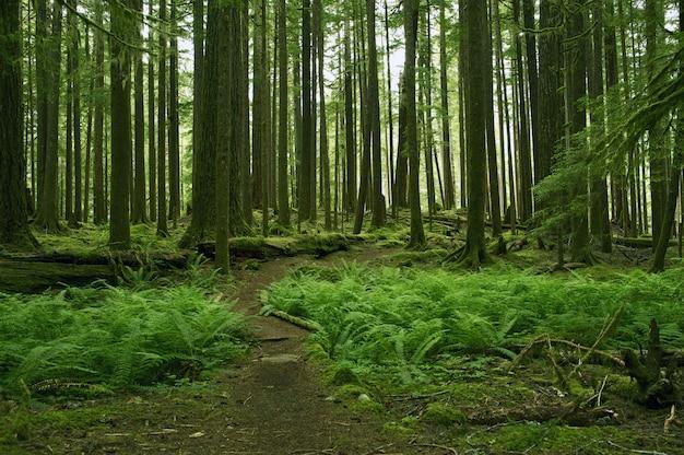 苔むじのある森の景色
