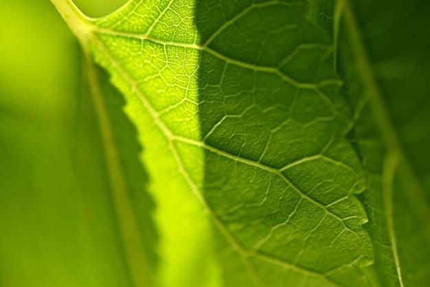 Зеленый лист крупным планом