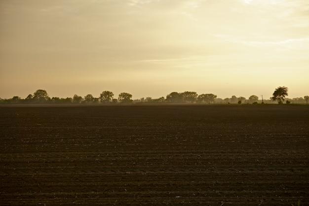 イリノイ農園