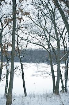 冬の森林垂直