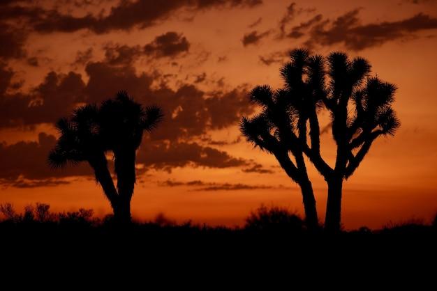 モハベ砂漠の夕焼け