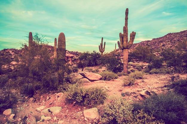 Аризонский пустынный пейзаж