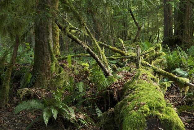 Мосси тропический лес