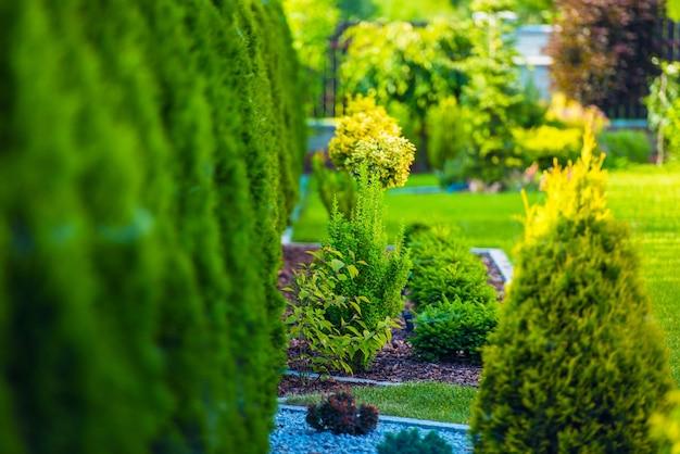 Красивый зеленый сад
