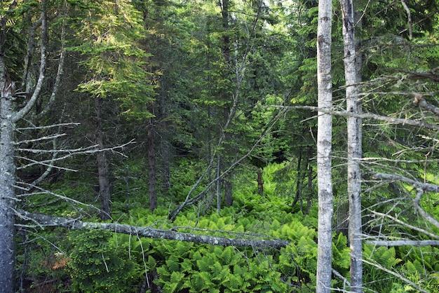 ミネソタの森