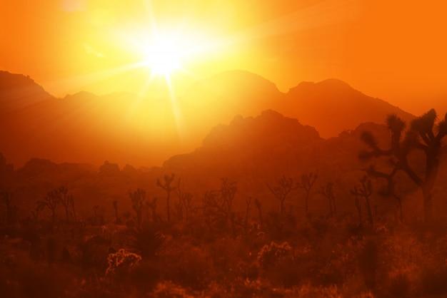 カリフォルニアの砂漠の熱