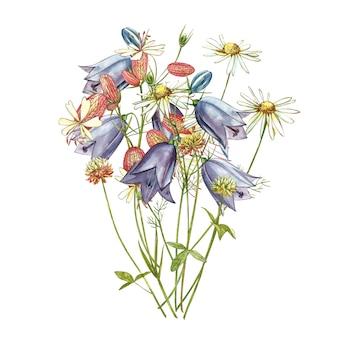 膀胱カンピオンとベルの花。ヤグルマギク、花の要素、手描きの植物図を描く水彩セット。