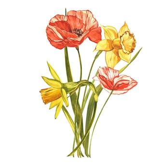 水彩の水仙とポピー。白で隔離される野生の花セット。植物の水彩イラスト、黄色い水仙の花束、素朴な花。白の水彩イラストのセット