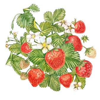 イチゴの葉と花と熟した果実。イチゴの茂みの明るい構図。手描き水彩画イラスト。