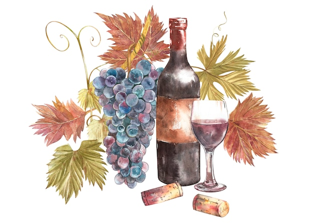 Бутылки и бокалы с вином и ассортимент винограда